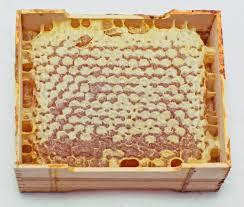Méhpempővel az egészségünkért!